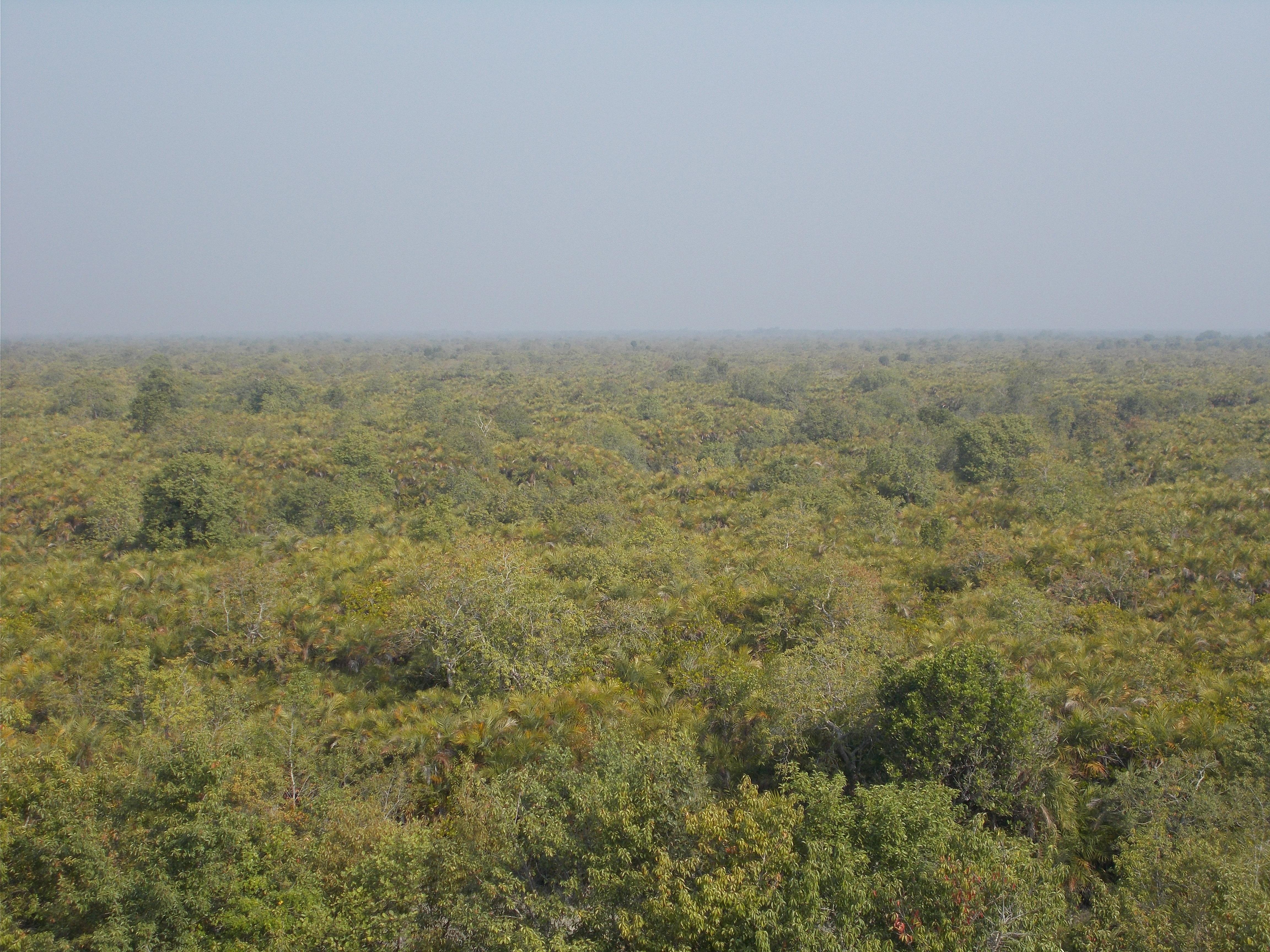 Sundarban Dense Forest