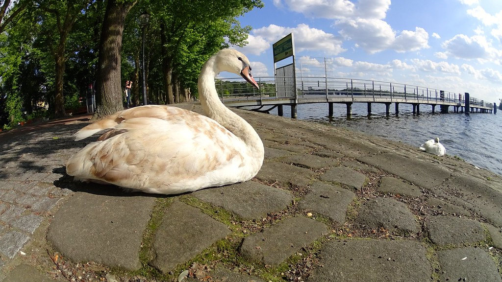 lake tegel photo