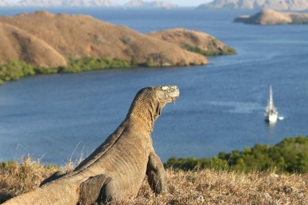 Indonesian tourism - Komodo Island, East Nusa Tenggara